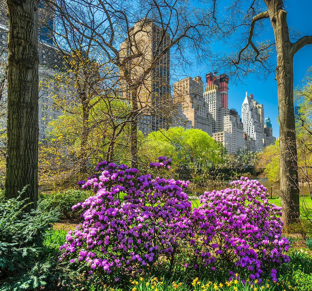 Central park, New York City. USA.