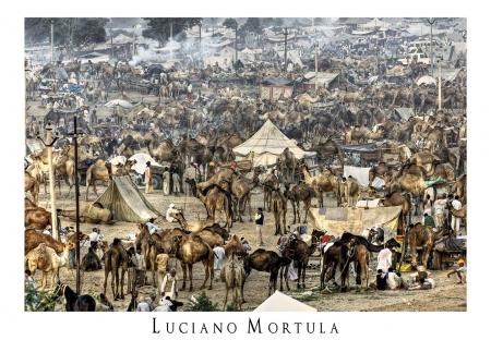 Fiera dei Cammelli a Pushkar